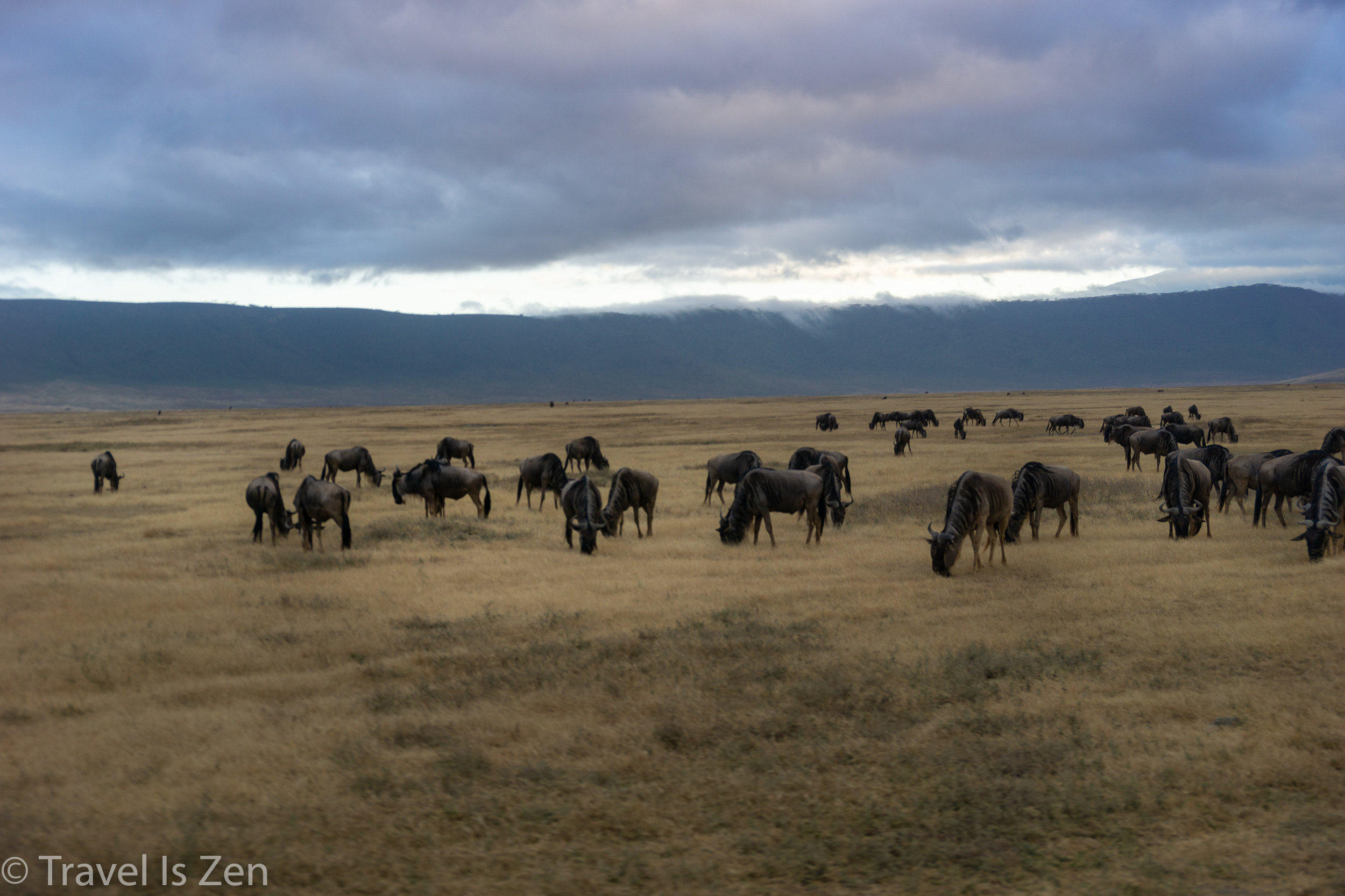 Tanzania Safari-21.jpg