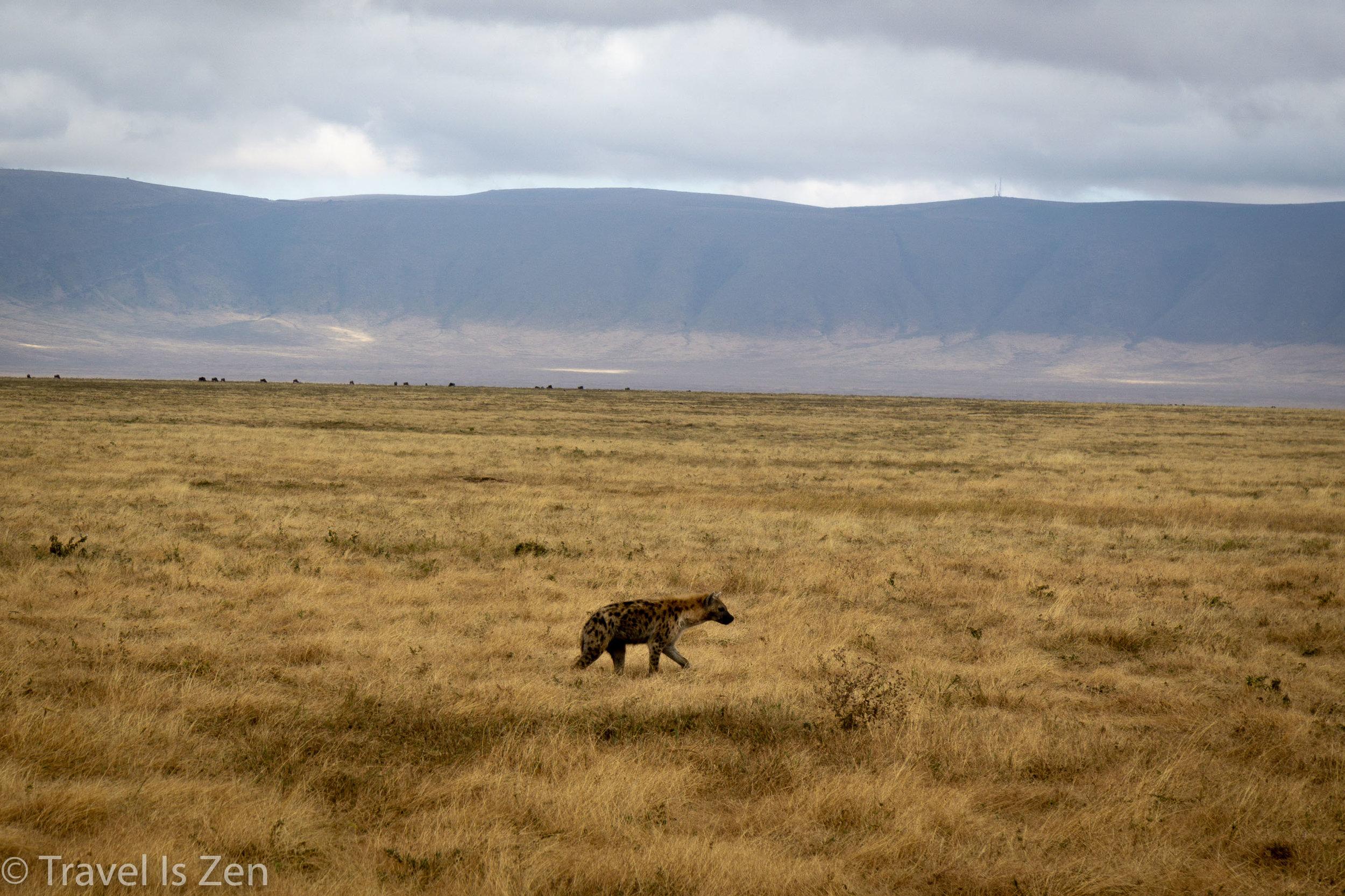 Tanzania Safari-24.jpg