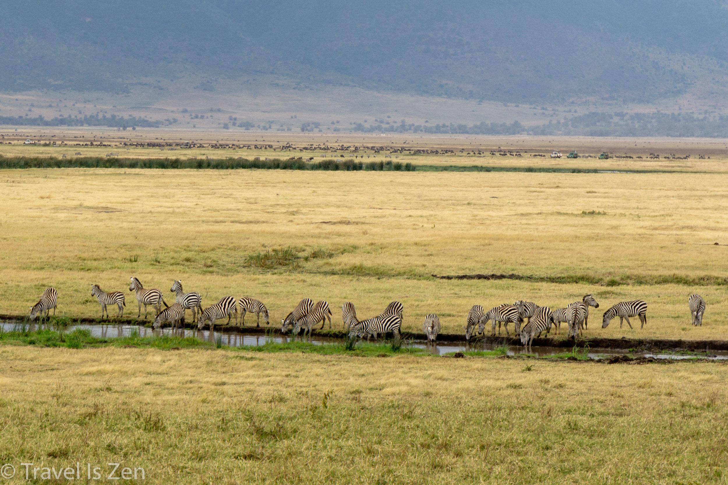 Tanzania Safari-26.jpg