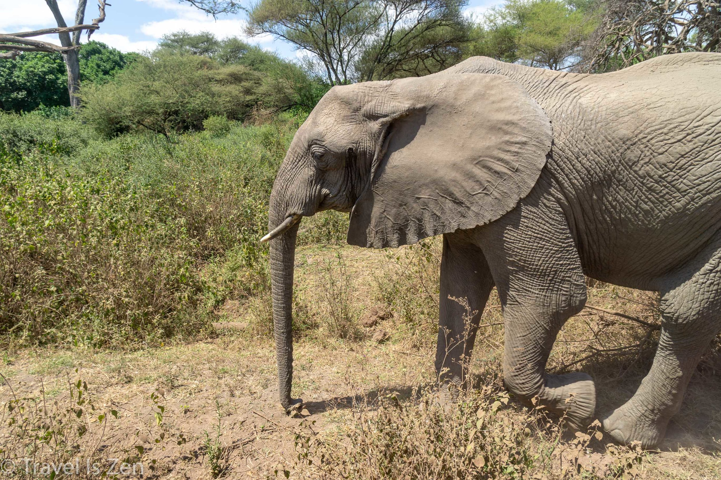 Tanzania Safari-16.jpg