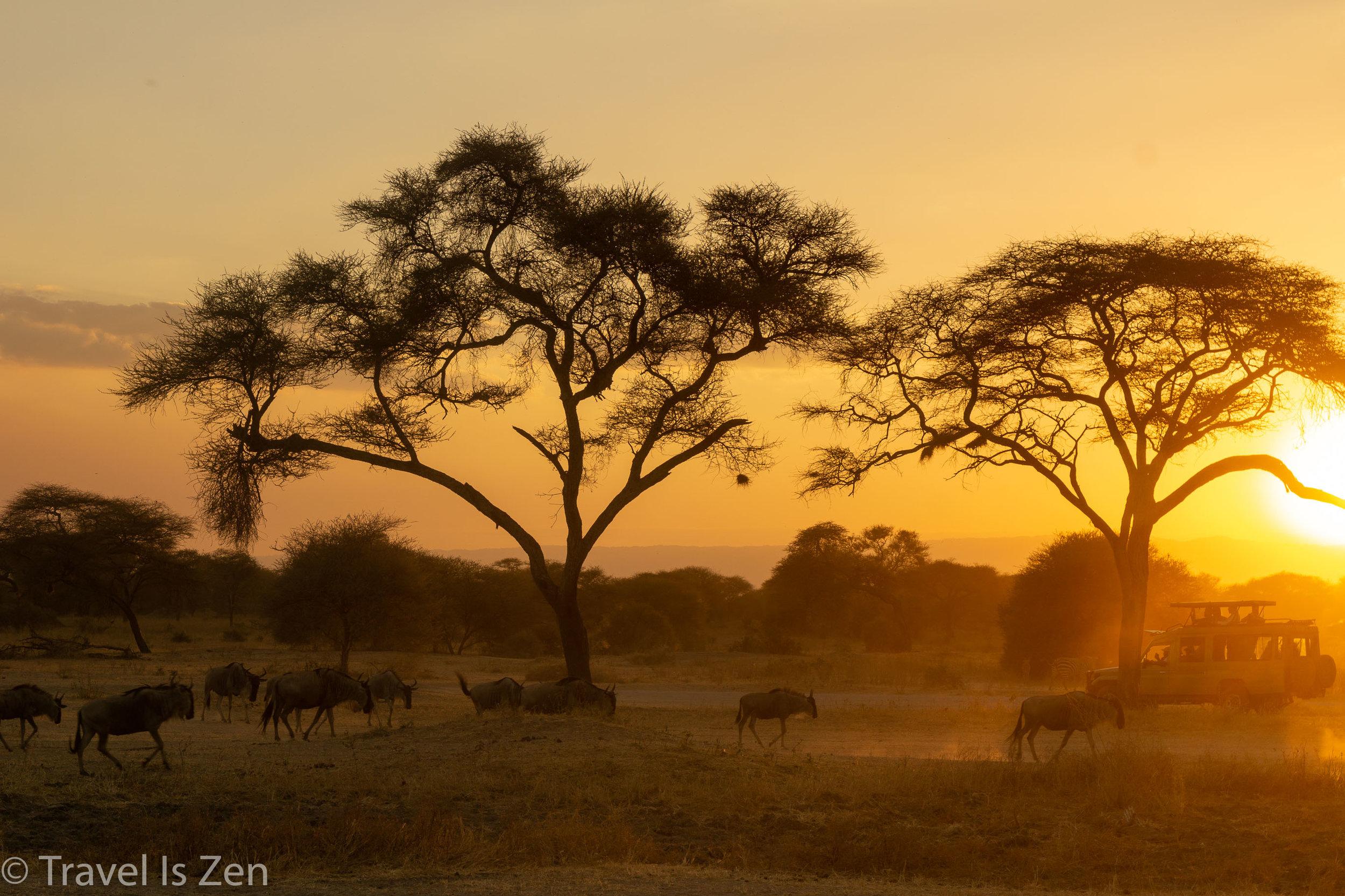 Tanzania Safari-15.jpg