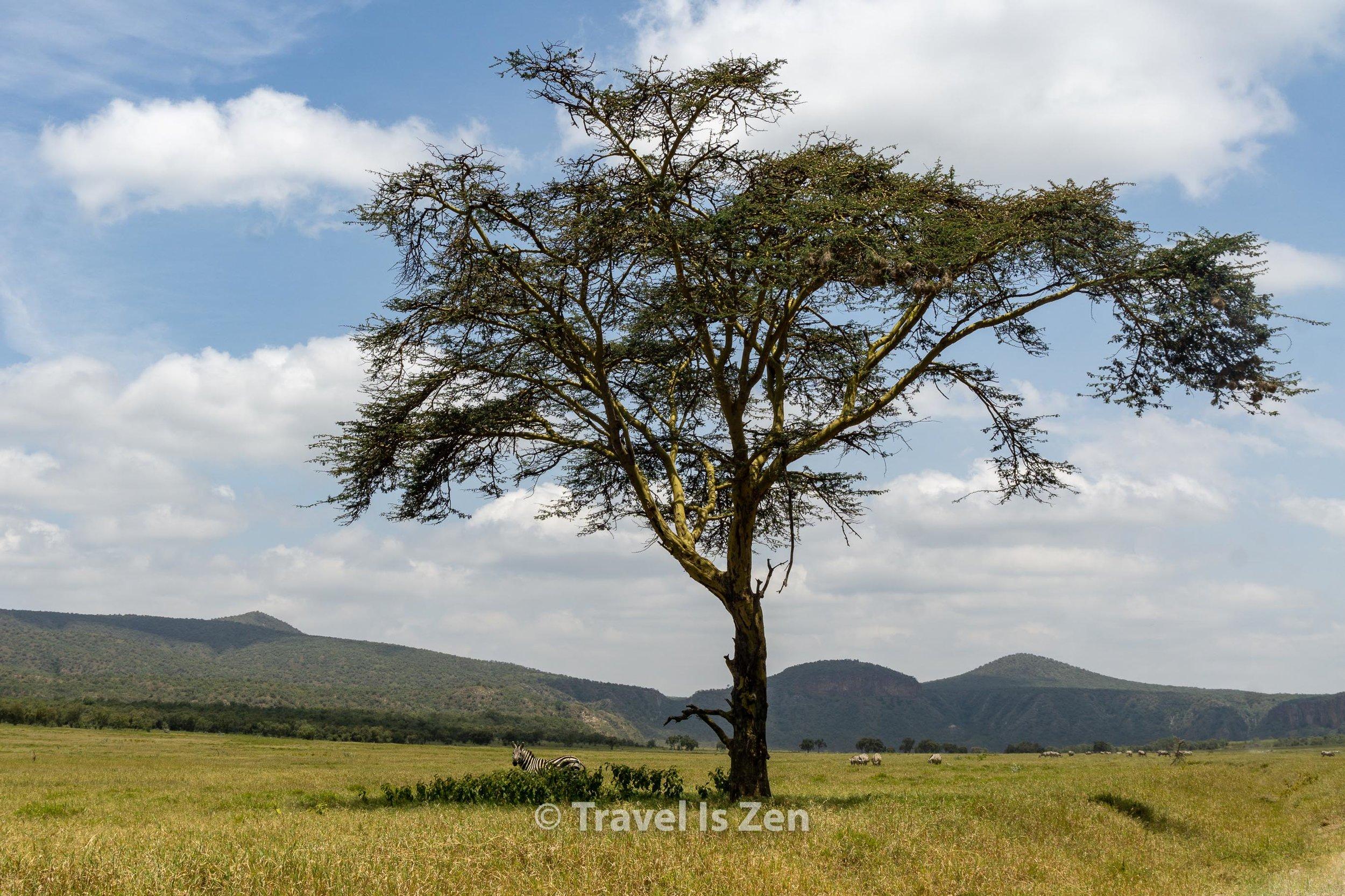 Hells Gate Kenya-8.jpg