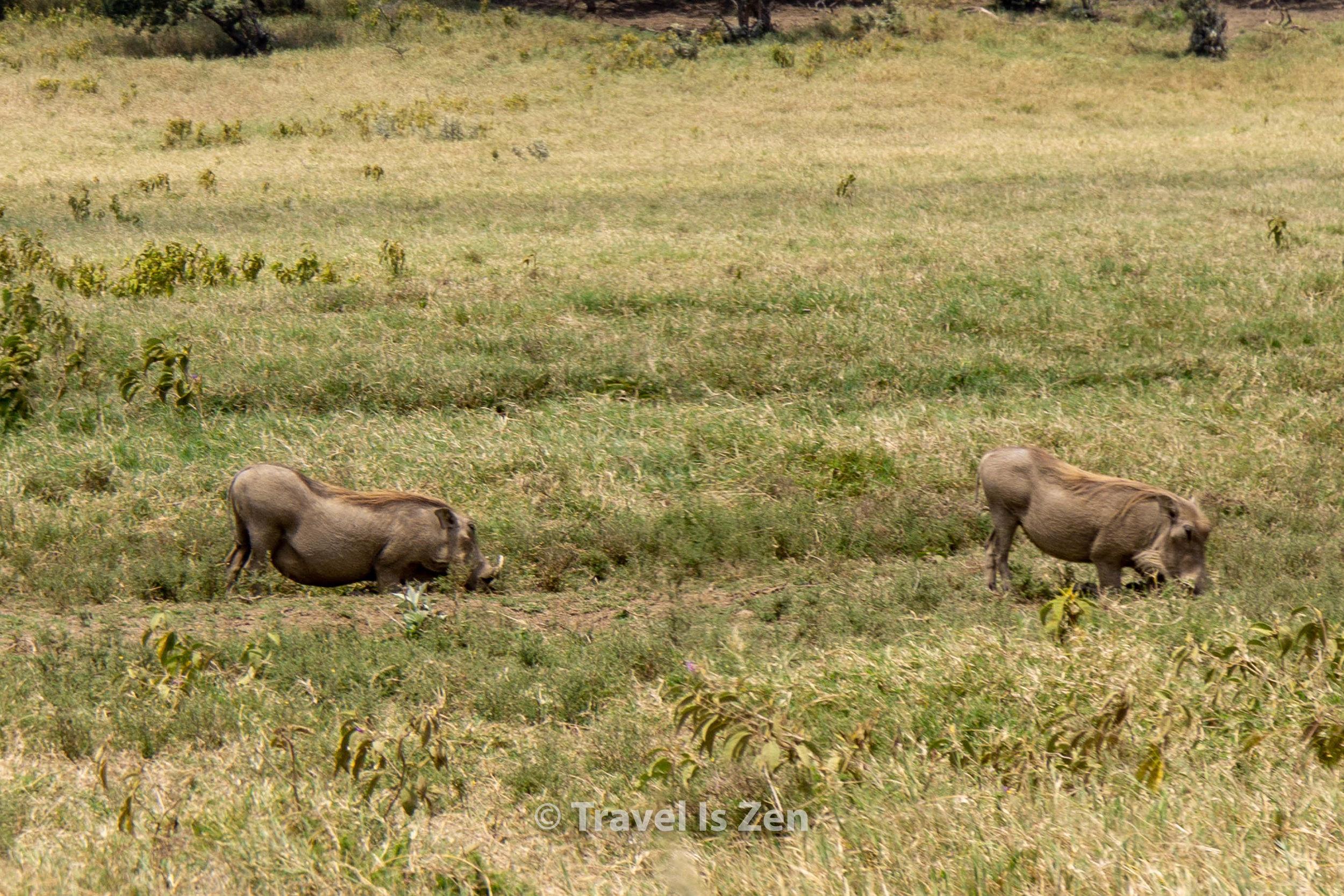 Hells Gate Kenya-11.jpg