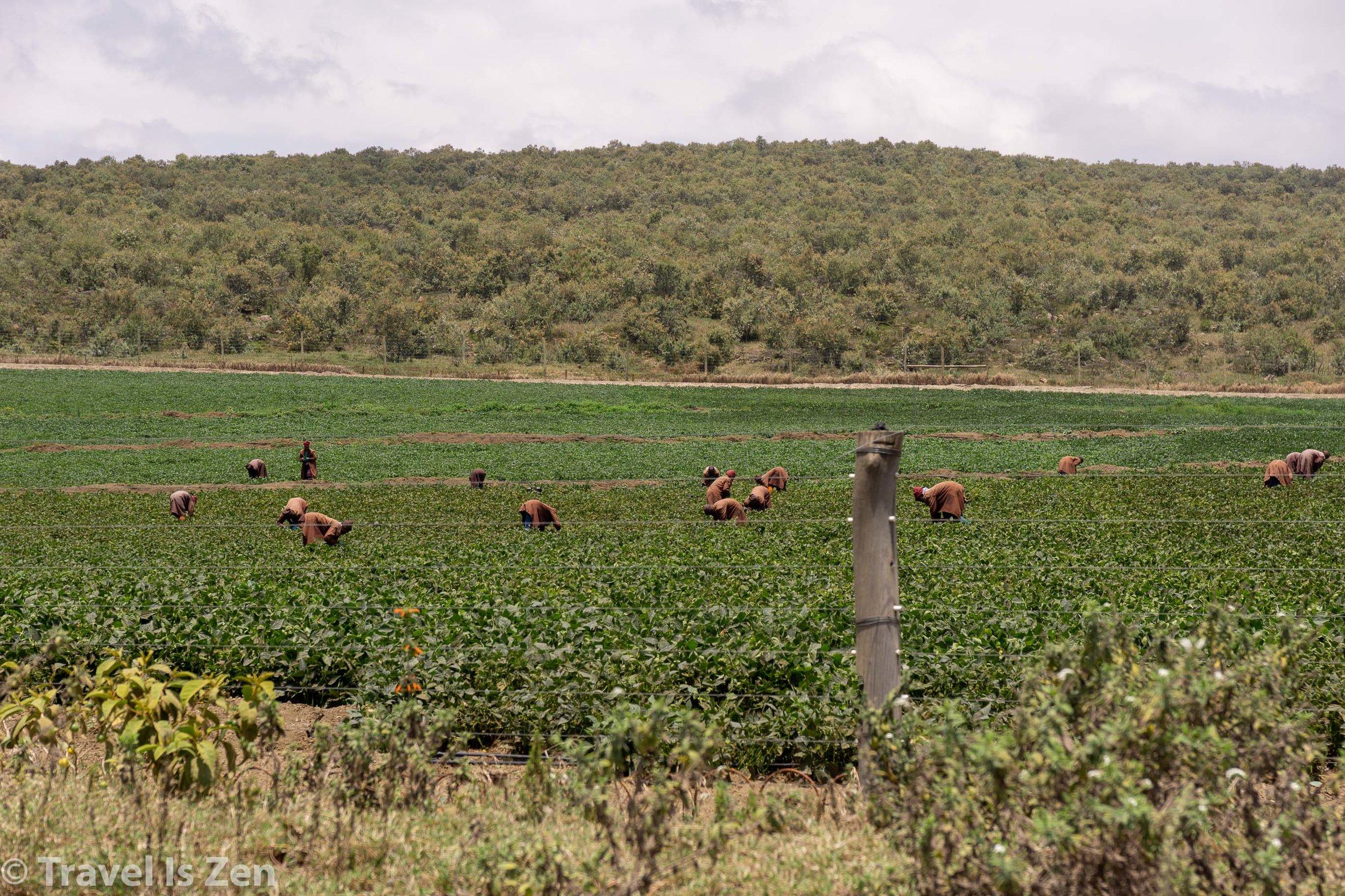 Kenya-55.jpg