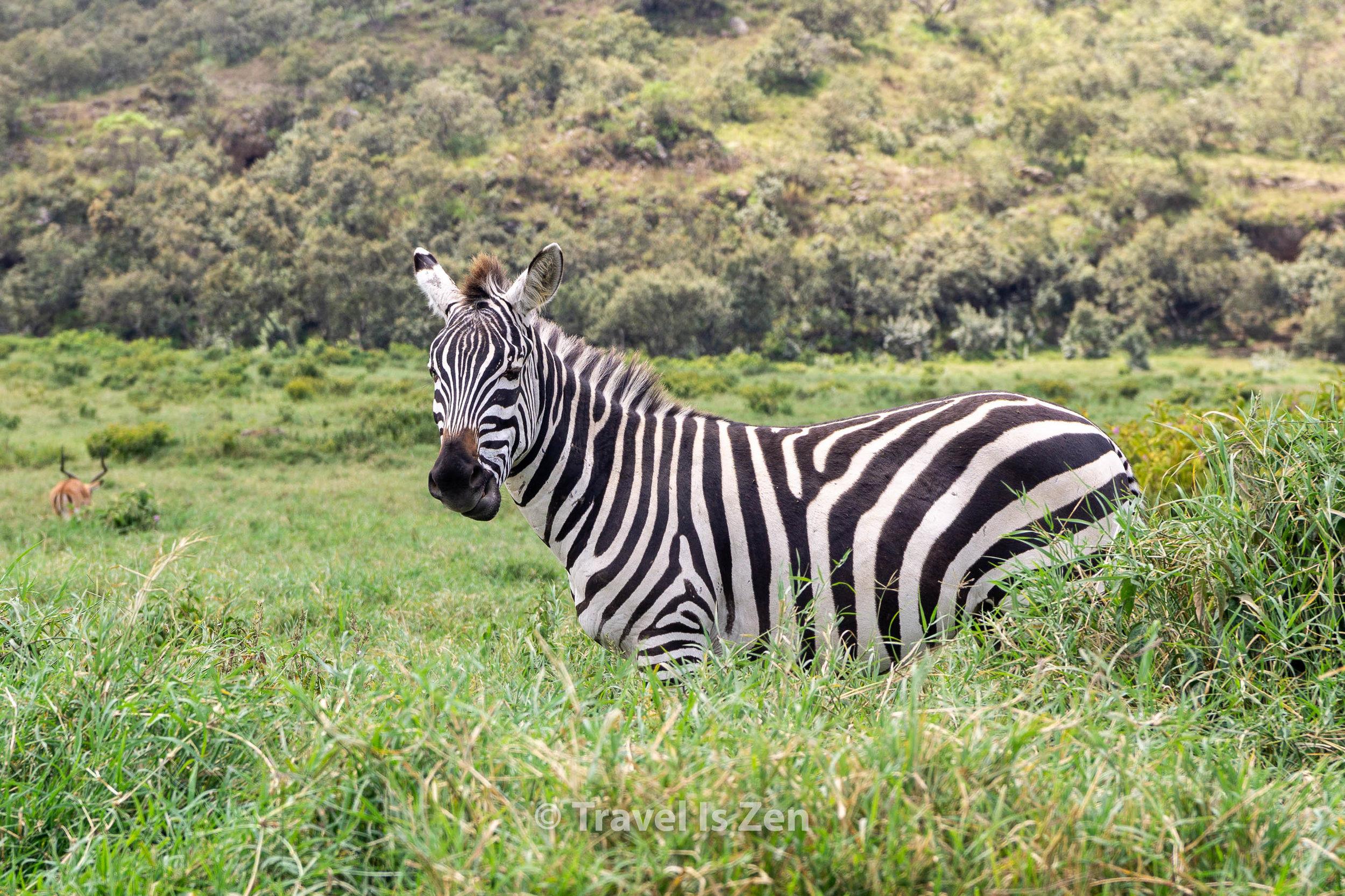 Hells Gate National Park, Naivasha, Kenya