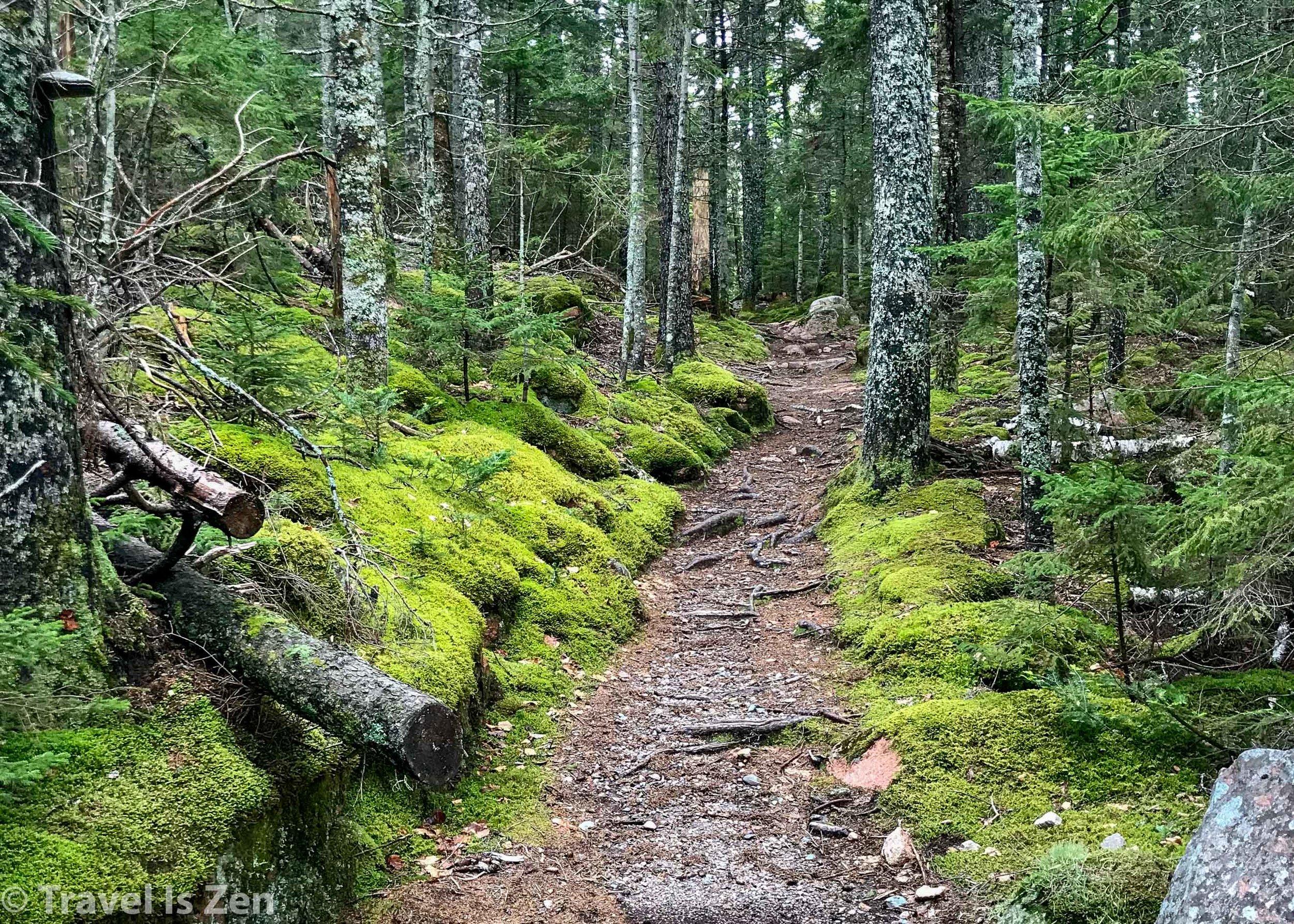 Path to Jordon Pond