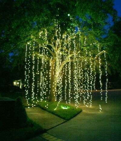 Love these string lights.