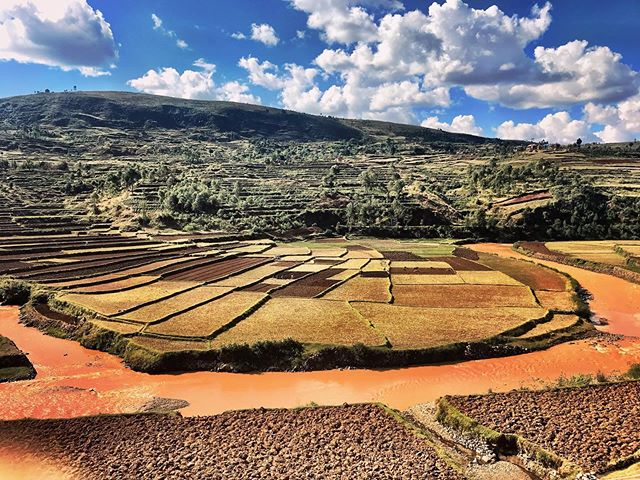 Rice 🍚 For many countries, rice is the main foodstuff.  Madagascar is no exception. People eat it at breakfast, lunch and dinner.  It can also be the main source of income for some malgache families. We like it too, cause rice fields make pretty good pictures 😉 . . . . . #mymadagascar #africa #madagascar #igersmadagascar #visitafrica #scenery #ricefields #africanlife #wanderlust #welivetoexplore #letsgoeverywhere #neverstopexploring #discover #travel #traveling #instatravel #beautifuldestinations #explore #exploremore #travelbug #traveladdict #traveltheworld #travelawesome #awesomeearth #thegreatoutdoors #getoutthere #travelingthroughtheworld #everytraveler #travelphotography