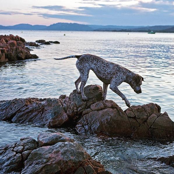 Fishing dog, Corsica.