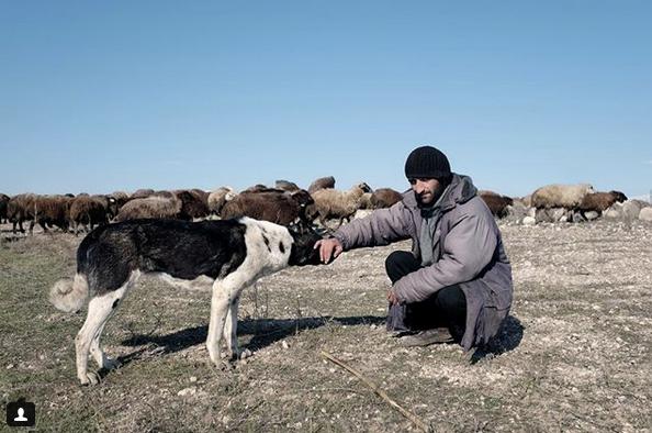 Sheepdog with shepherd, Armenia.