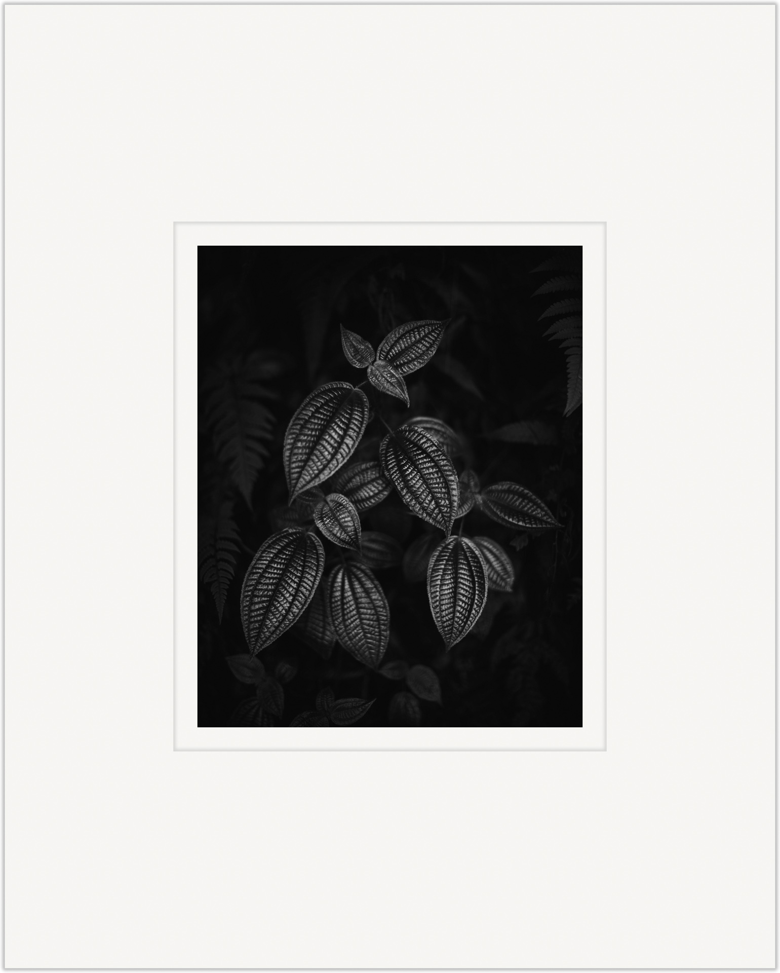 Foliis Candentis   20cm x 25cm Photo Paper Limited Edition of 99   IDR 799,000
