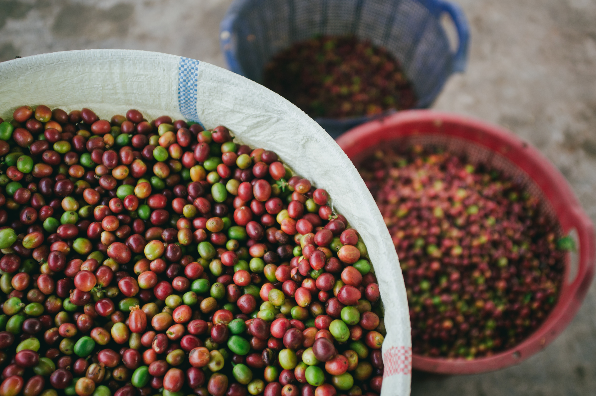 Adena Coffee - A partner for Indonesian coffee bean processing. Currently operating in Aceh Gayo & Flores Sokoria.