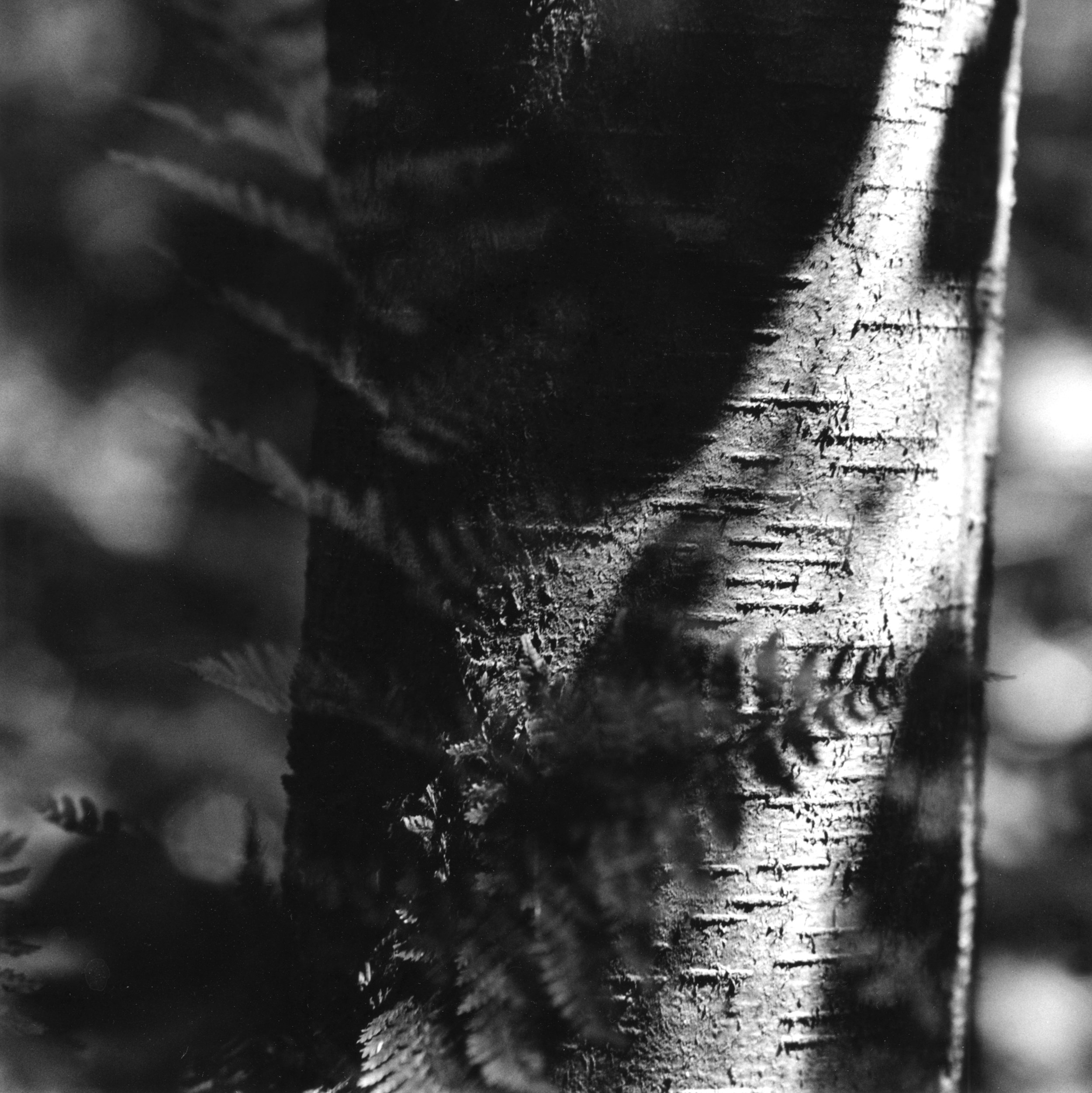Chesterewood_Fern and Tree.jpg