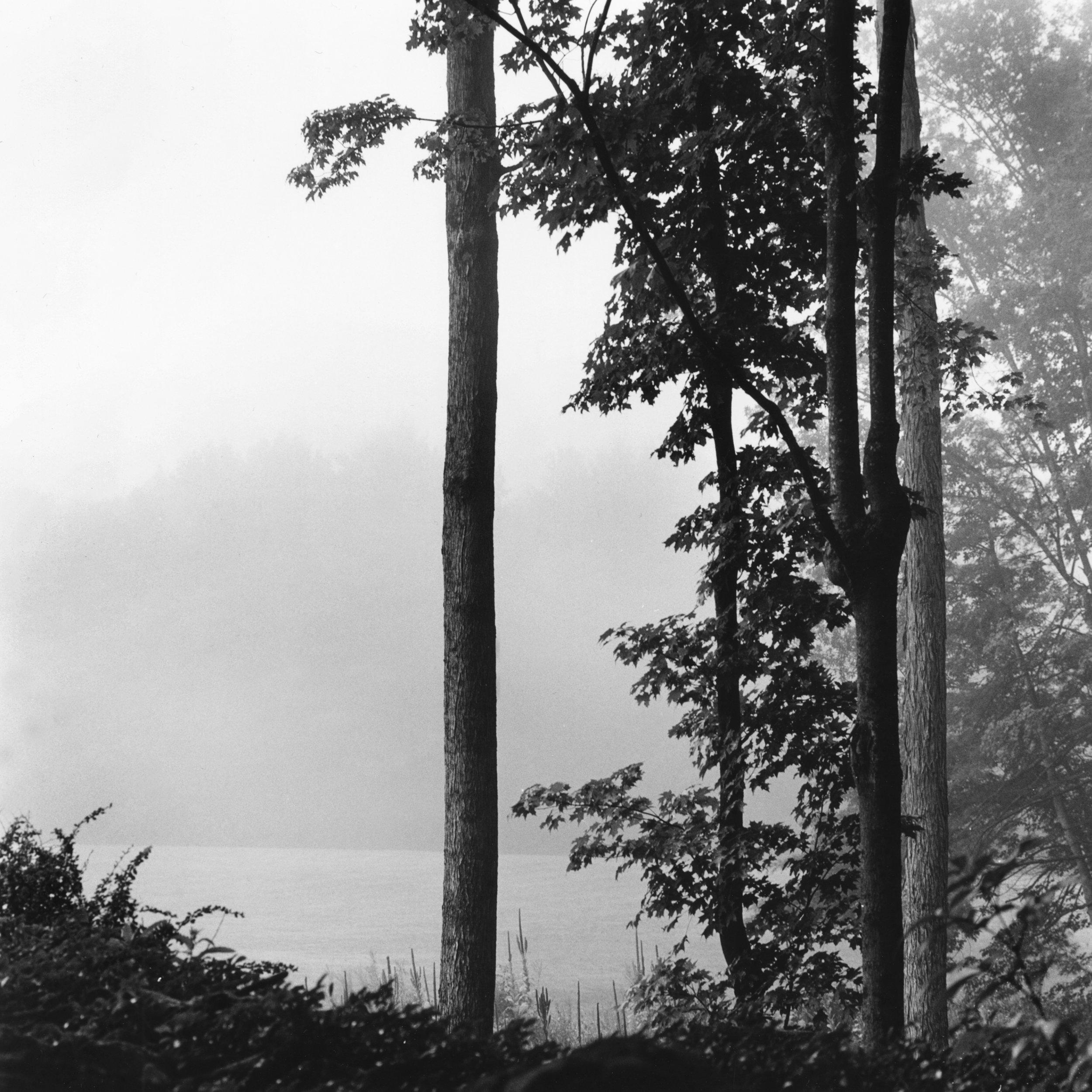 Chesterwood_Fog.jpg