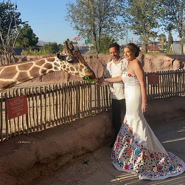 Congrats to Jennifer and Carlos, they got married in Ireland and celebrated here in El Paso at the @elpasozoo ! Her dress is stunning 😍 Pt. 1 #irelandwedding #elpaso #mexicantheme #wedding #bride #groom #giraffe #zoo #weddingplanner #floraldress