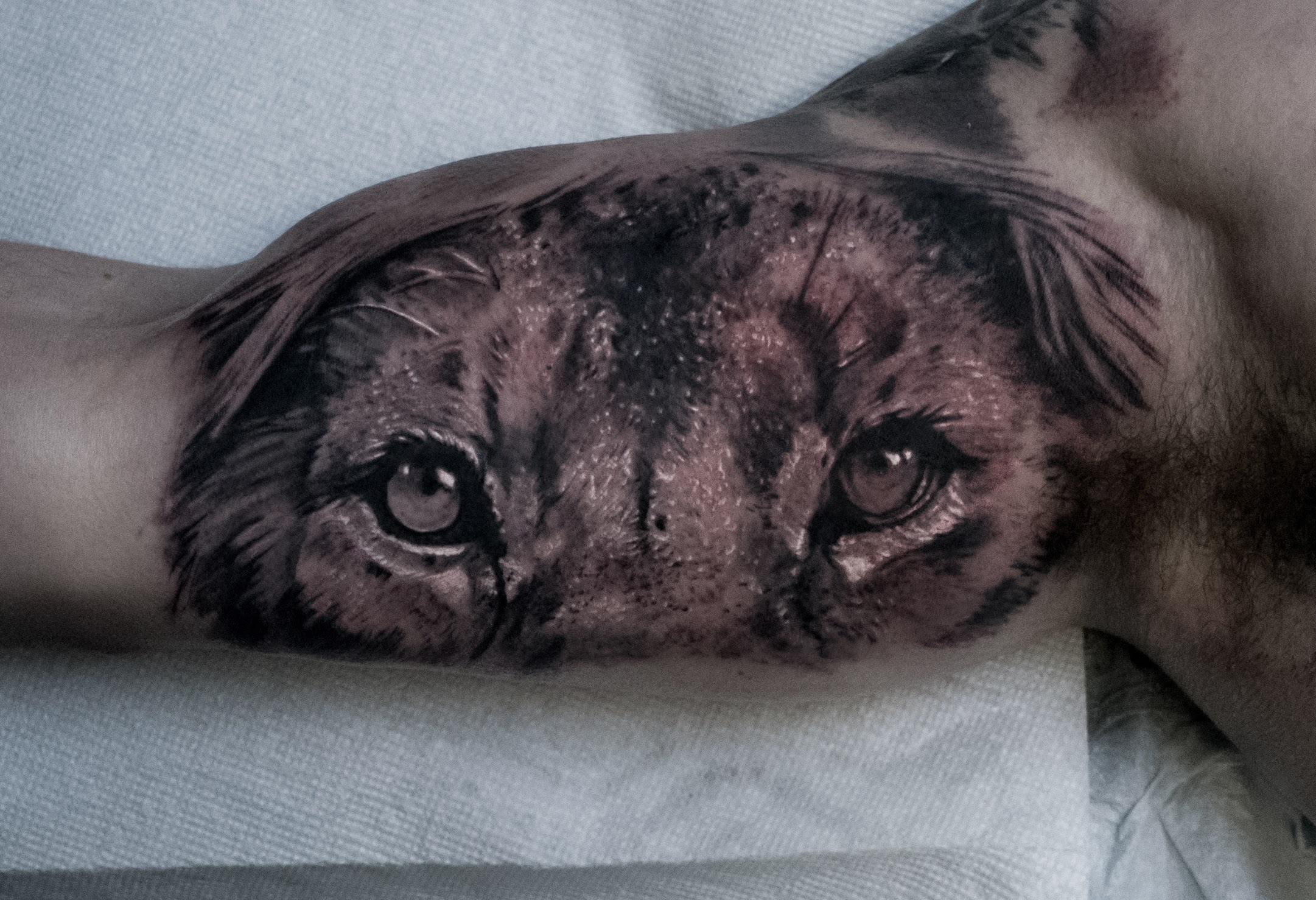 Photorealistic tiger eyes tattoo by Scoot Ink