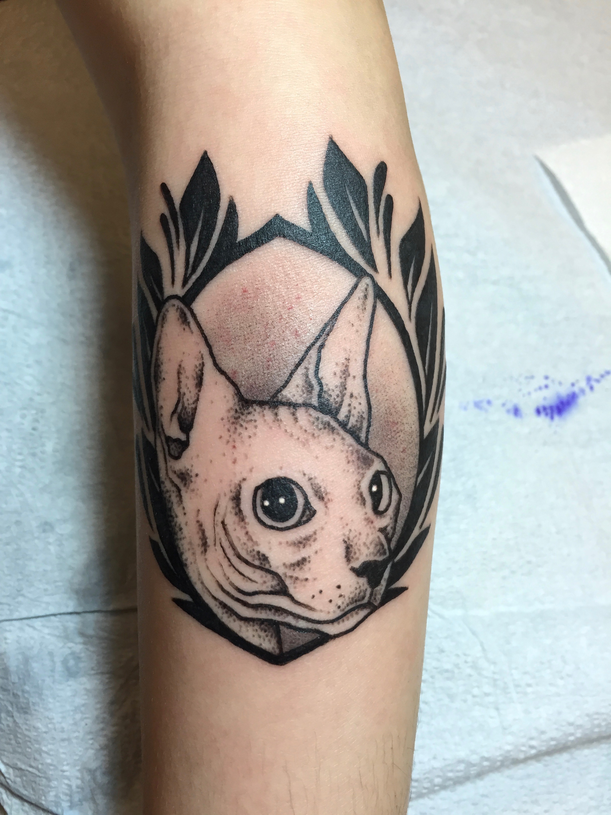 Blackwork cat tattoo by Alveno