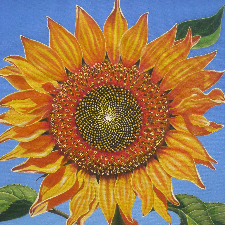 Sunflower, 2014, oil on canvas, 16x20.JPG