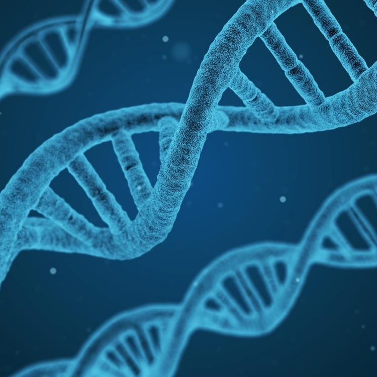 """Textiles and Language  """"Threads"""" of deoxyribonucleic acid (DNA)"""