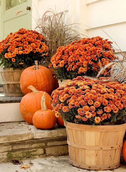 Make your pumpkins last through Halloween. Instead of carving, decorate your porch with  this pumpkin and mum combo .
