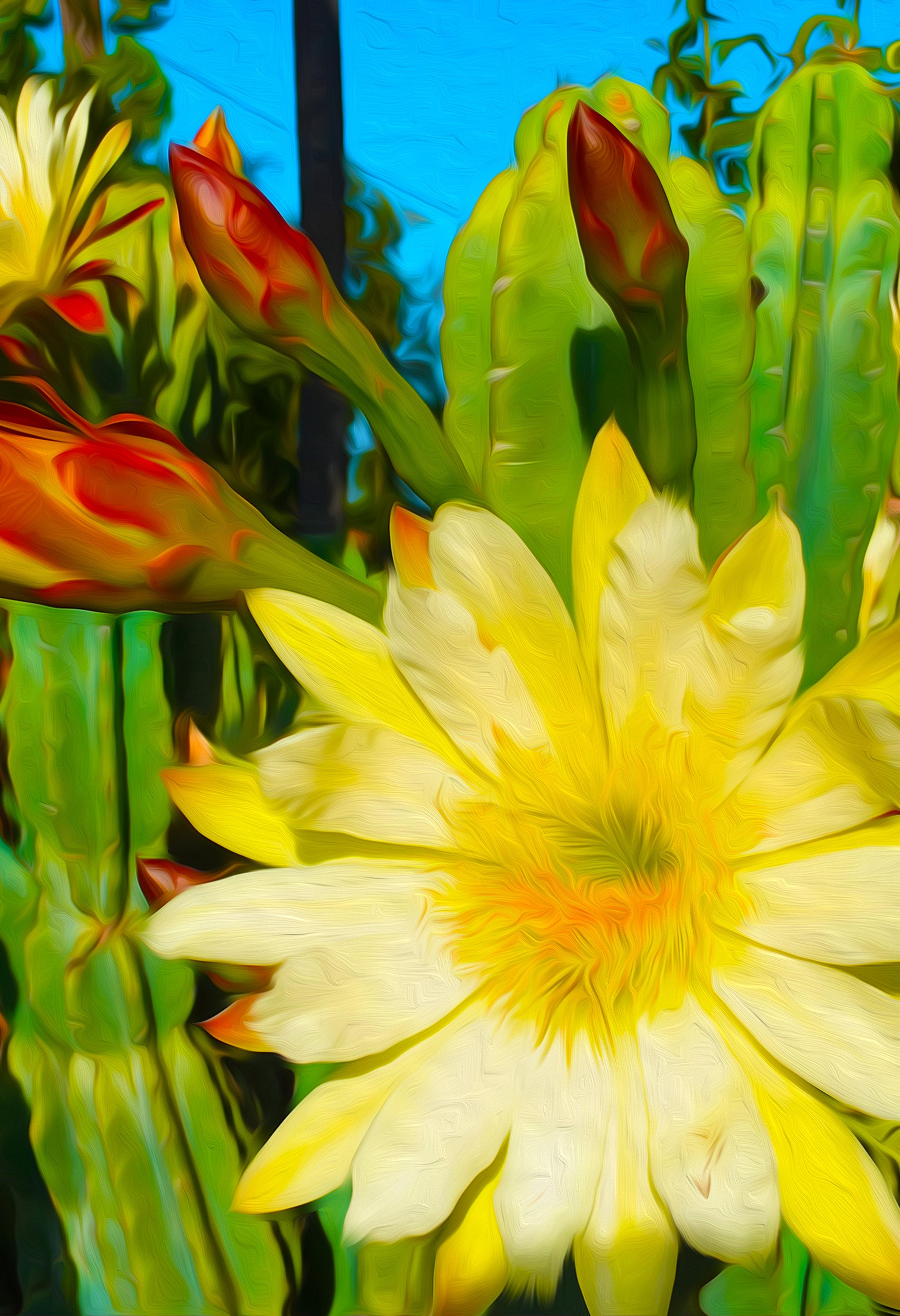 Cactus Blossum 1 jpg