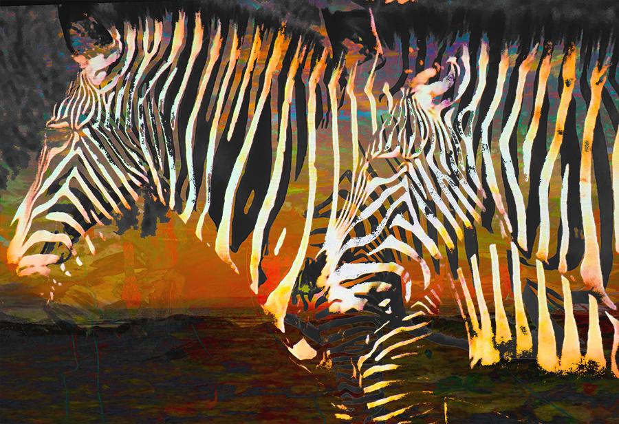 Color Zebras  3 4x6psd.jpg
