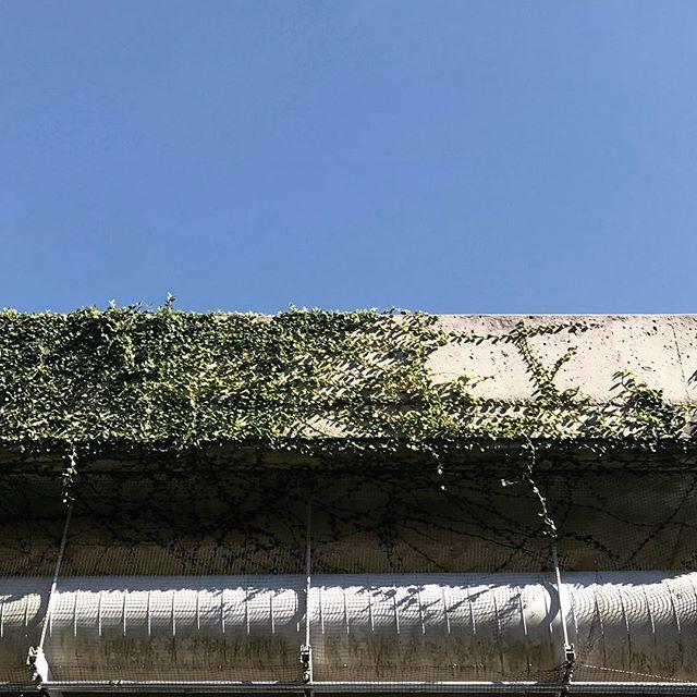 Ivy. . . . #arch #archi #archilover #archilovers #architecture #architecturephotography #gominimalmag #interiordesigner #minimablu #minimalmonday #design #designer #realgoodmag #inspo #minimalism42 #okcalmcollective #fndit #thisaintartschool #photographer #designphotography #inspirationphotography #texture #textural #historicalarchitecture #historicalbuilding #rsa_minimal #lookupotd #arkiminimal