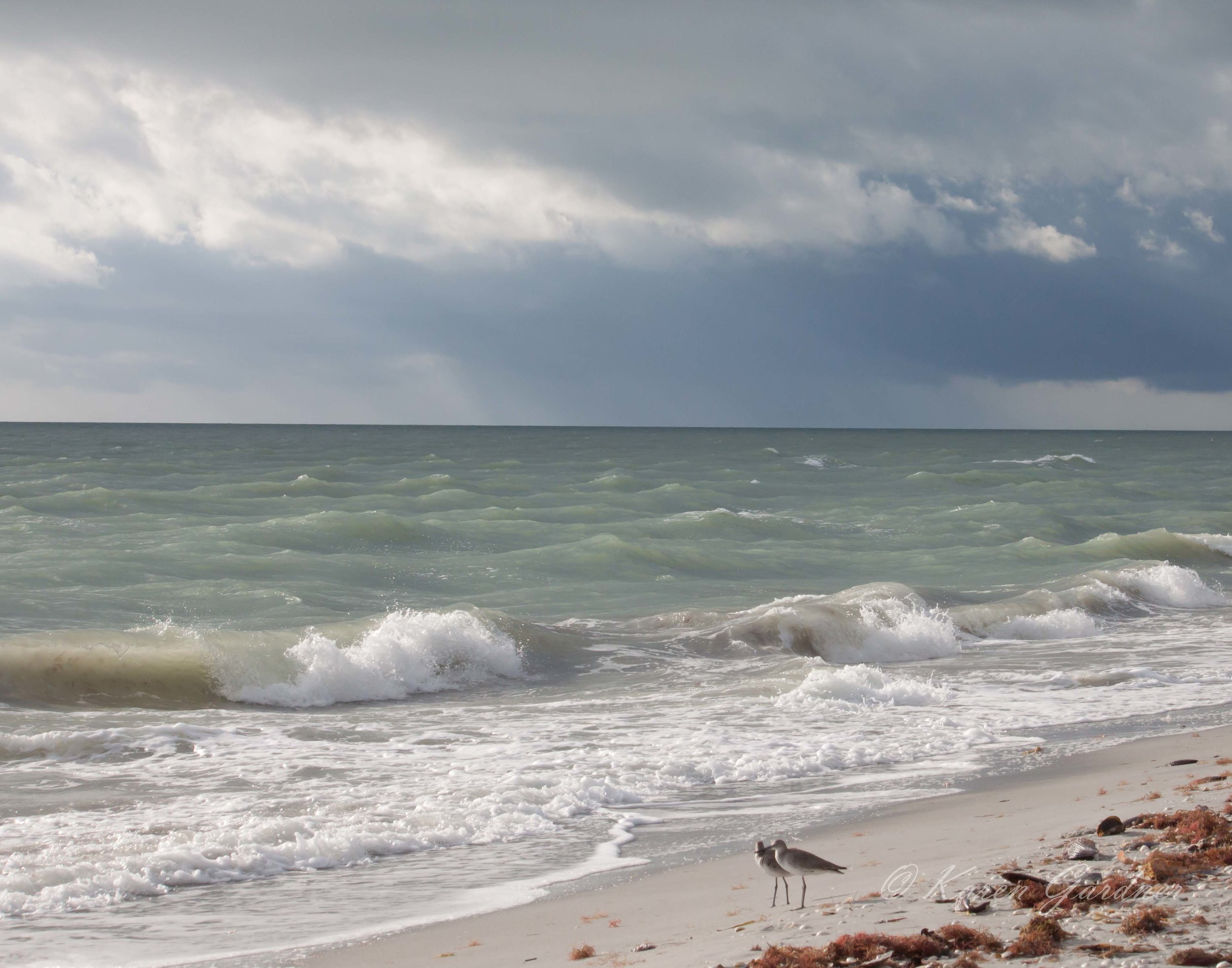 Gulf Seascape 2
