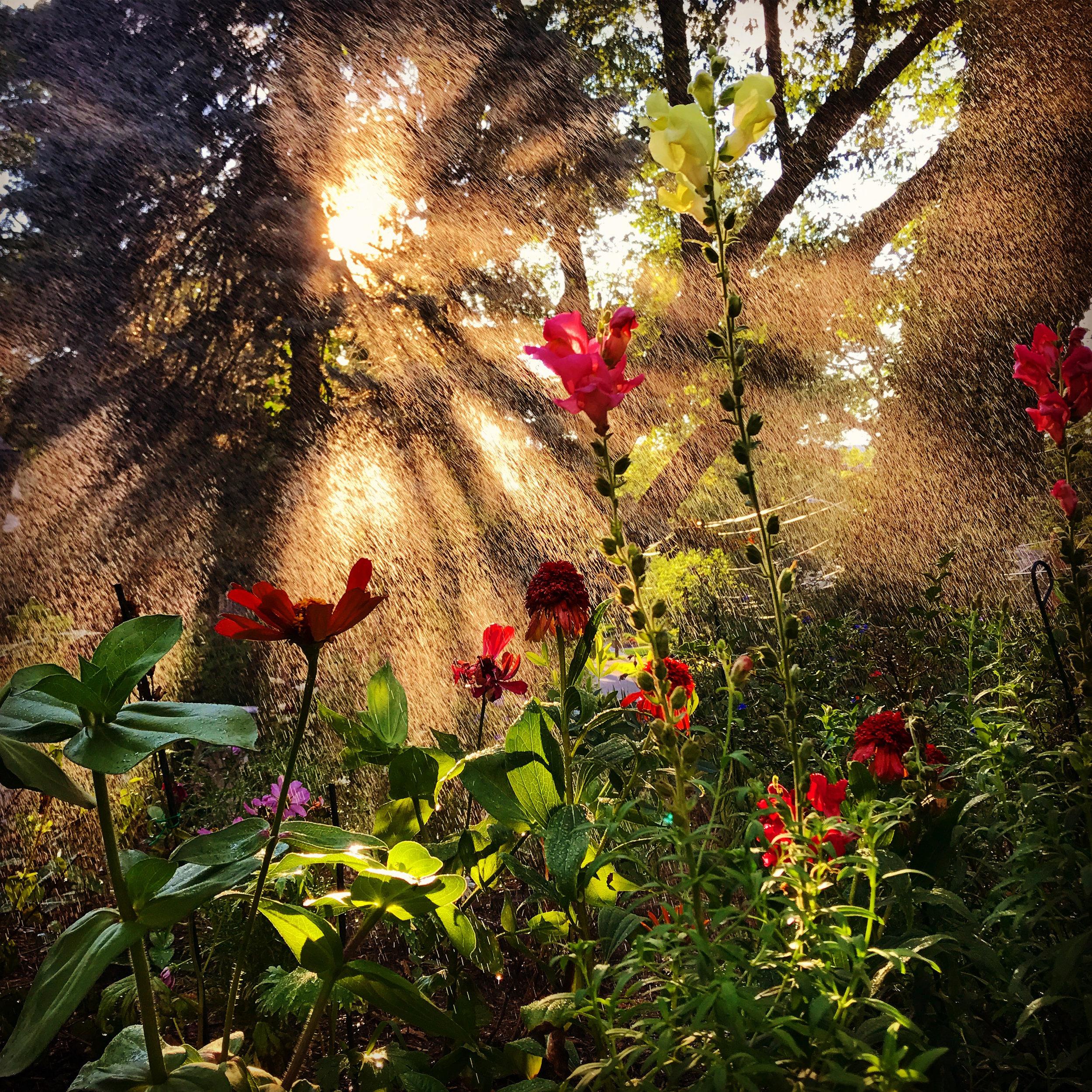 IMG_9633 magic garden sunrays lisa  rayman goldfarb.jpg