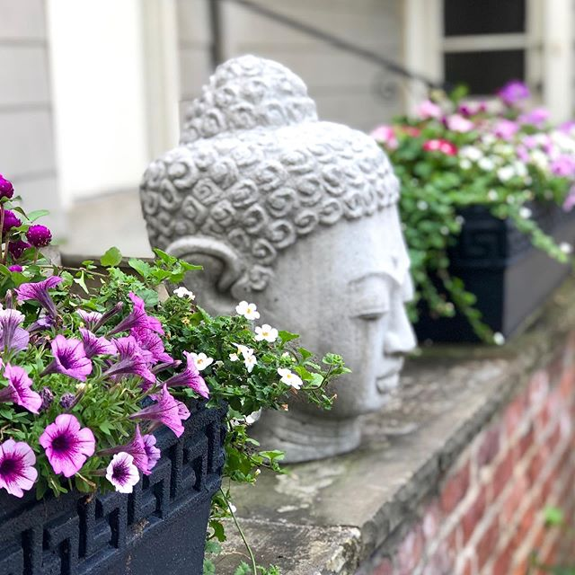 This beautiful Buddha was gifted to me by my wonderful gal on my crew. I am greeted by her beauty and peacefulness every time I enter my home and feels like I am being watched over. I love her! #flowersfeedthesoul #flowerstalker #gardenstyle #gardenlove #zengarden #flowersofinstagram #instaflowers  #flowersinbloom  #floral_shots #floralstyles_gf  #cottagestyle #cottagegarden #containergardening  #all_gardens #garden_styles #windowboxes #springcontainers #springflowers #buddhas  #buddhagarden #windowboxwednesday