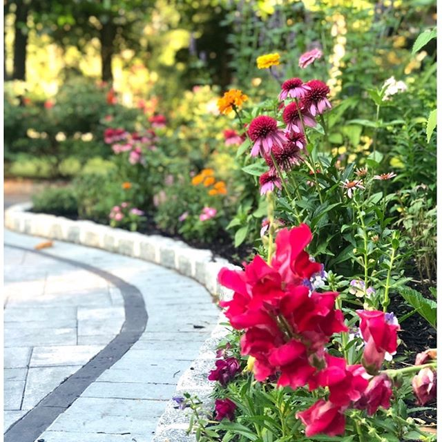 I adore Snapdragons. #flowersfeedthesoul #flowerstalker #gardenstyle #gardenlove #zengarden #flowersofinstagram #flowerstagram #instaflowers  #flowersofinstagram #flowersinbloom #floralstyles_gf  #cottagestyle #cottagegarden  #all_gardens #garden_styles #springgarden #springflowers #wildflowergarden #coneflowers #snapdragons