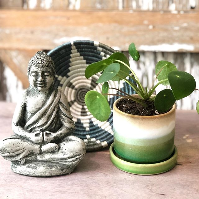 How cute is this plant? If you are not following any plant accounts, it's Pilea also known as The Chinese Money Plant. It's the IN plant right now and you can see why! Super easy and and she produces babies to pass on to friends. plantsfeedthesoul #bohostyle #bohogarden #botanicalstyle #house_plant_community #houseplantclub #jungalowstyle #plantsofinstagram #idrinkandgrowthings #myscandinavianhome #apartmenttherapy #bohointeriors #botanicalgarden #botanical_garden #plantlover #jungalowhome #jungalowdecor #jungalow #flauntyourleaves #talkplantytome #beniceorleaf #wanderlushinterior #plantsdecor #pilealove #pileapeperomioides