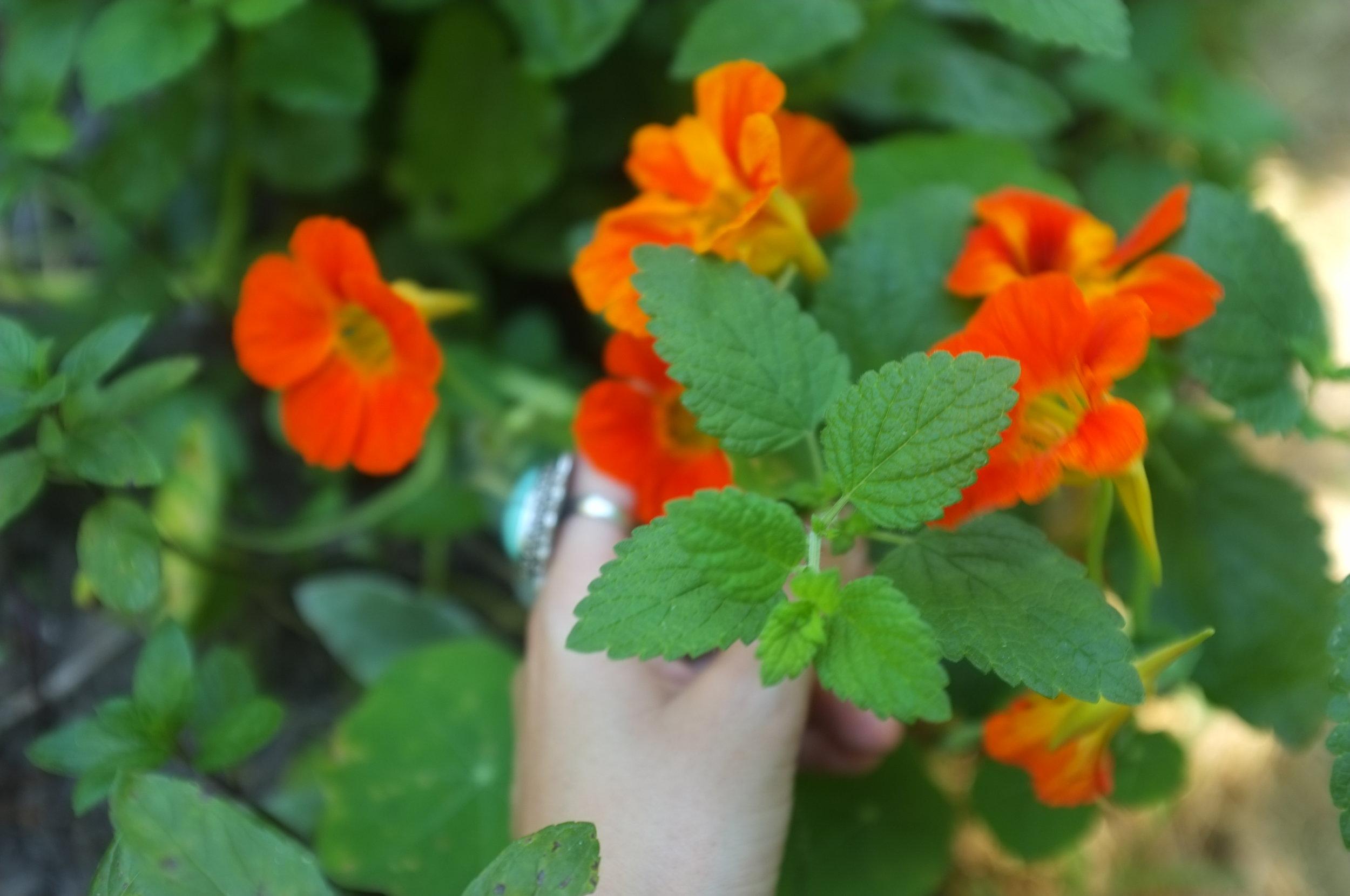 nasturium-hands.jpg