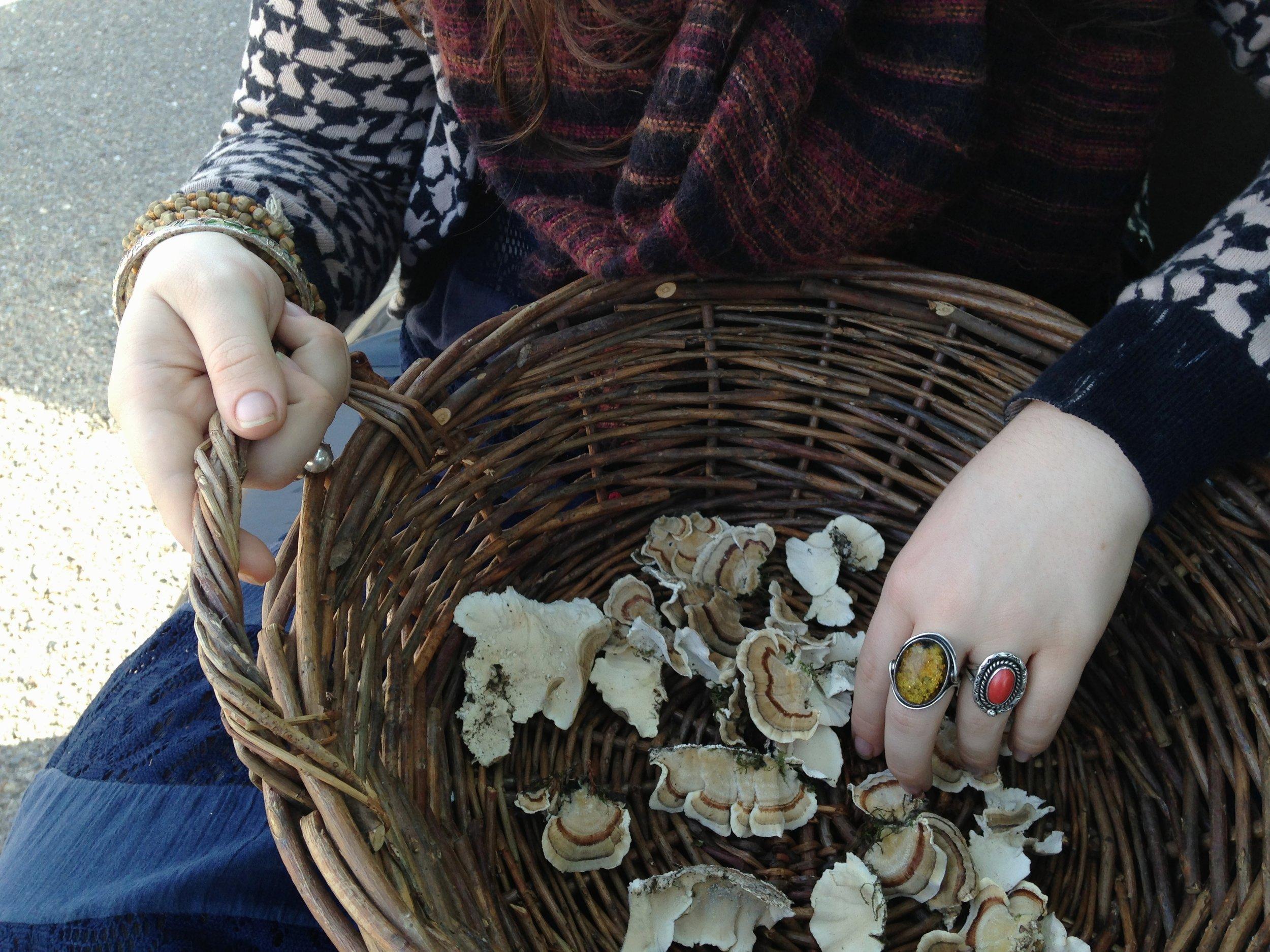 mushroom-harvest.jpg