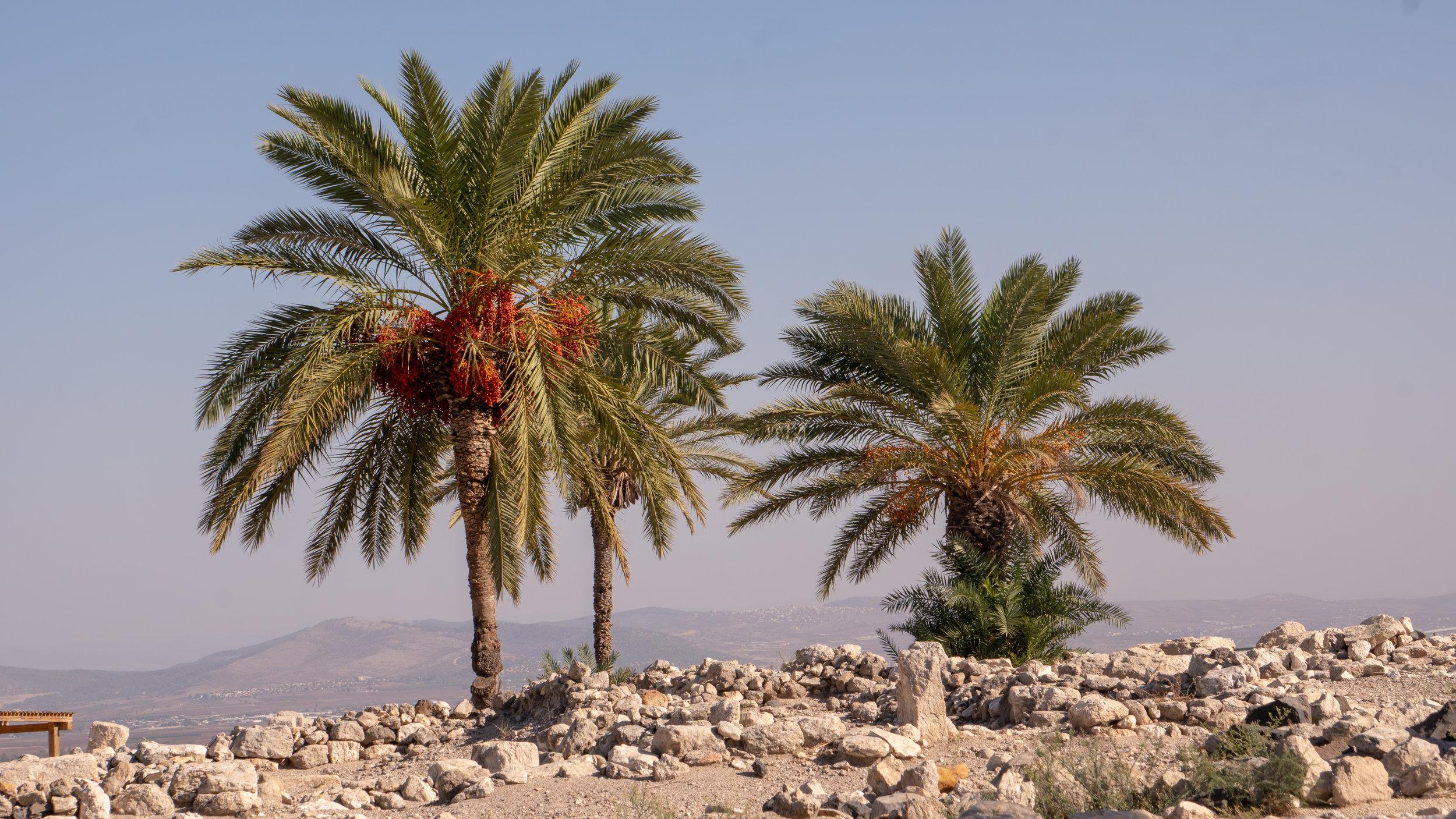 Israel-148.jpg