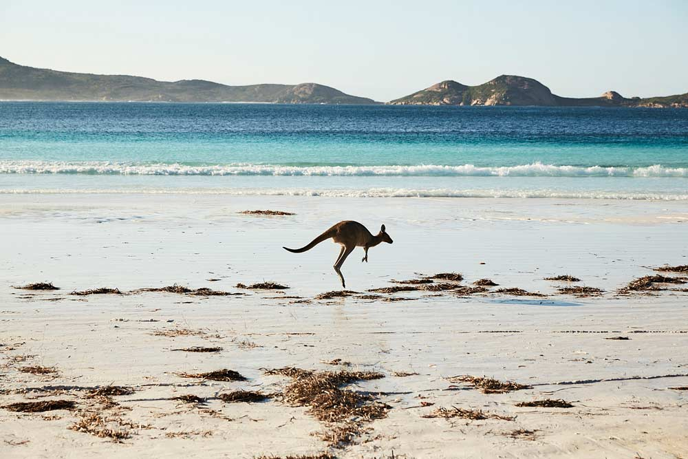 Lucky-Bay-3_Tourism-WA.jpg