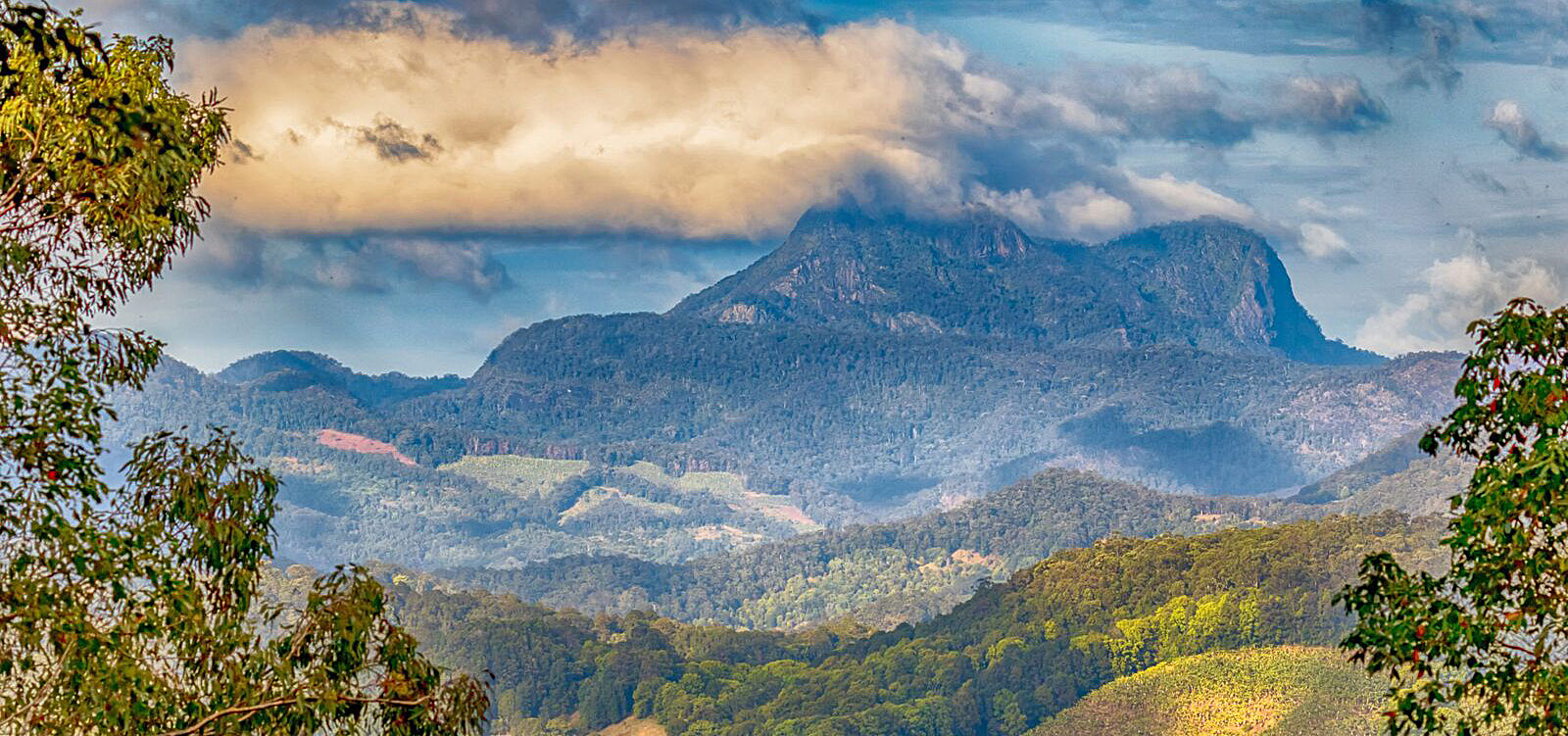 mount warning .jpg