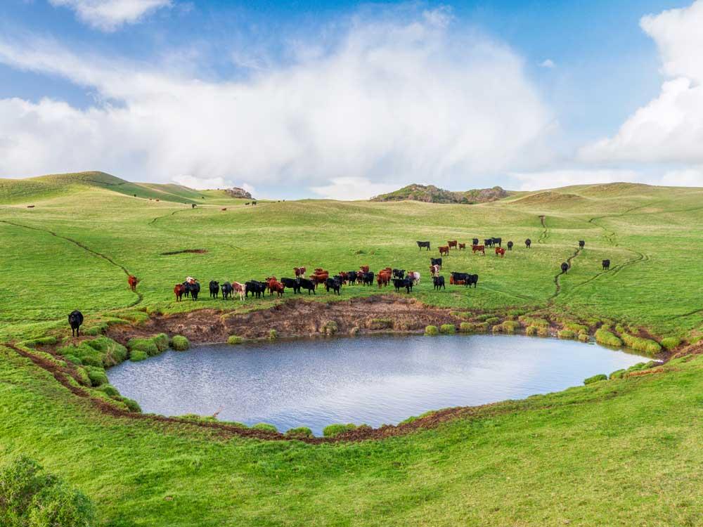 Above-King-Island_Kramer-Photography-3853_Cattle.jpg