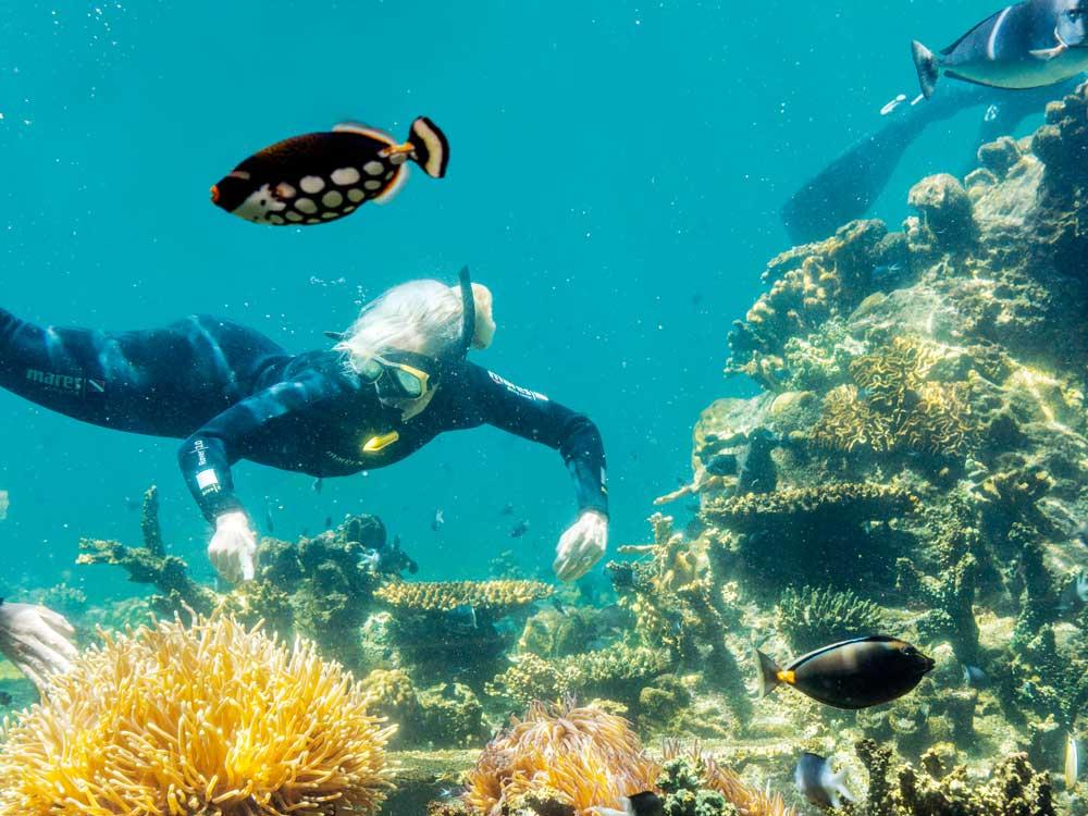SeaWorld_Diving.jpg