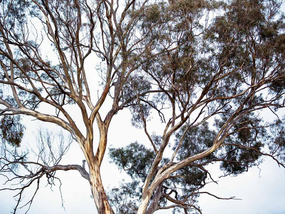 Turon_Trees.jpg