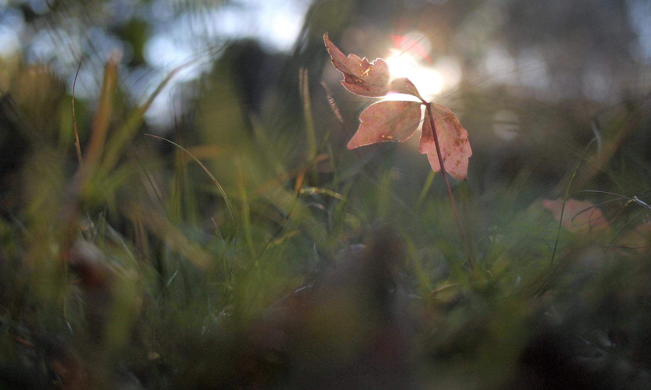 Meadow4.jpg