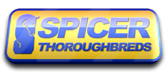 Spicers Thoroughbreds