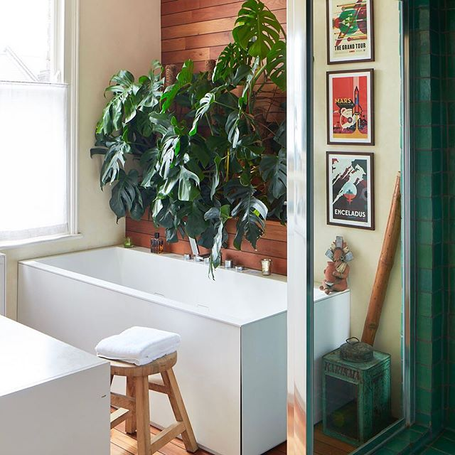 A favourite of mine: the #bathroom - I wanted a #spa feel to the room with this (now) gigantic #cheeseplant , an attractive #whirpool #bathtub and #hammam #shower / #steamroom / I will post more of it 😀 - 📷Matt Clayton - #bathroomdecor #bathroomdesign #bathroomdesigns #bath #interiordesign