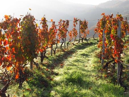 Douro vineyard.jpg