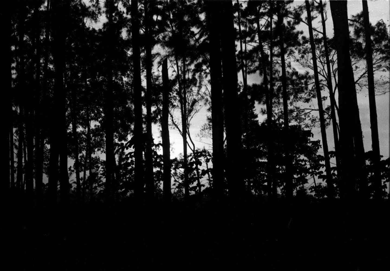 deep-forest2.jpg