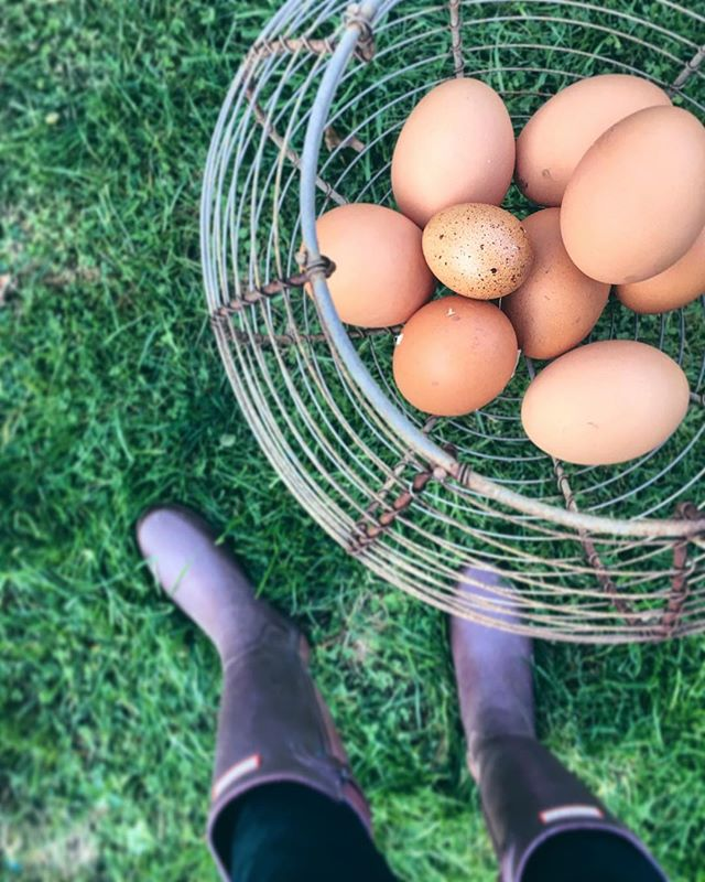 Good morning friends! Did you catch the latest Session Notes' post about how an organization in England is using hens to motivate and include elderly care residents in meaningful activity?! Link in bio to read more about @henpoweruk! 🐣 #counselor #sessionnotes #counseling #counselling #bacp #mentalhealth #lmft #lcsw #lpc #mentalhealthawareness #psychologist #socialworker #schoolcounselor #psychotherapist #psychology #therapist #henpower  #chickens #henkeeping #elderlycare