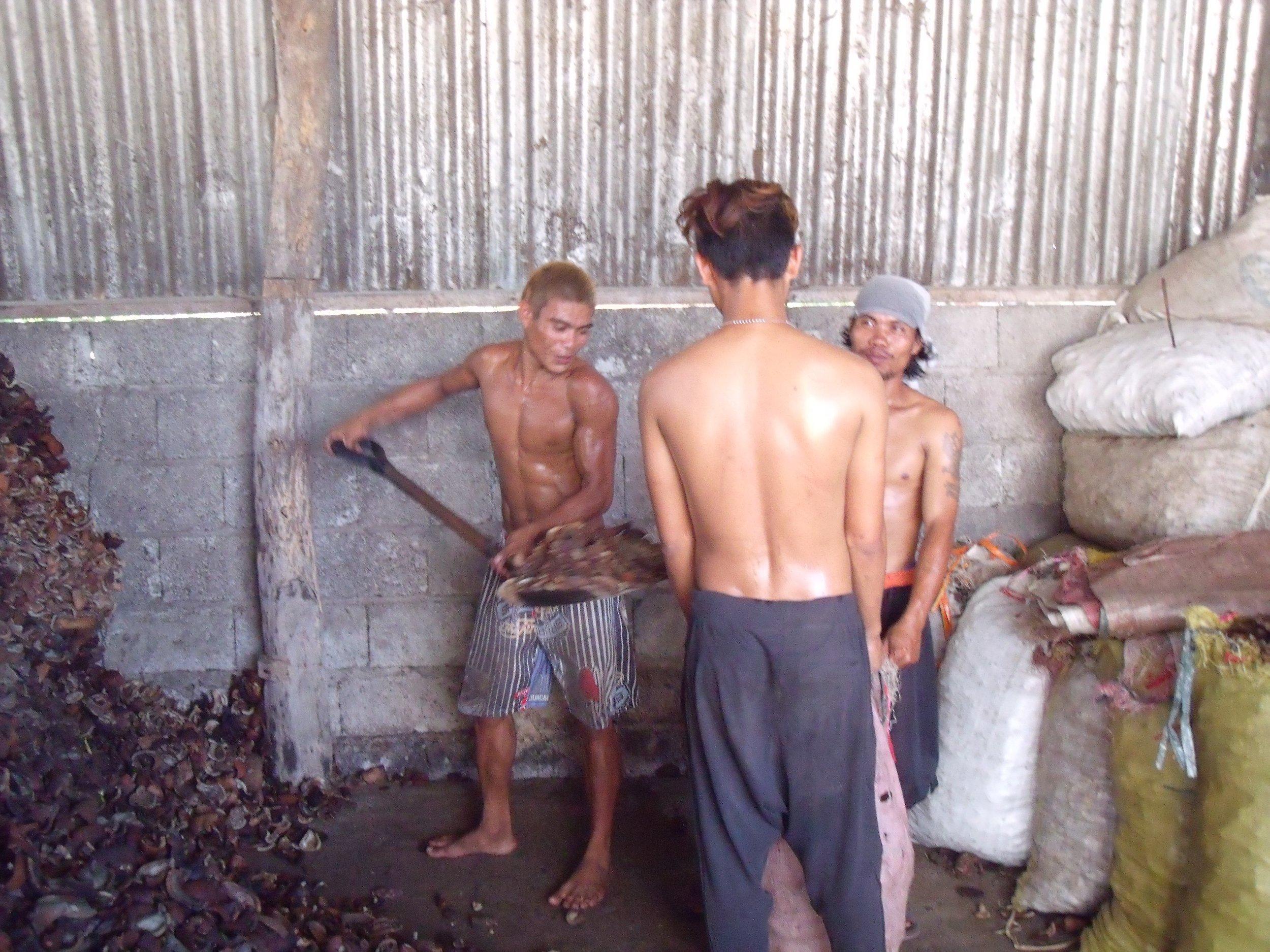 Laborers shoveling copra