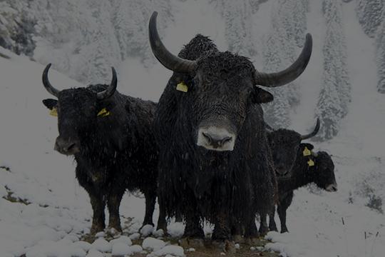 - No bull Blog