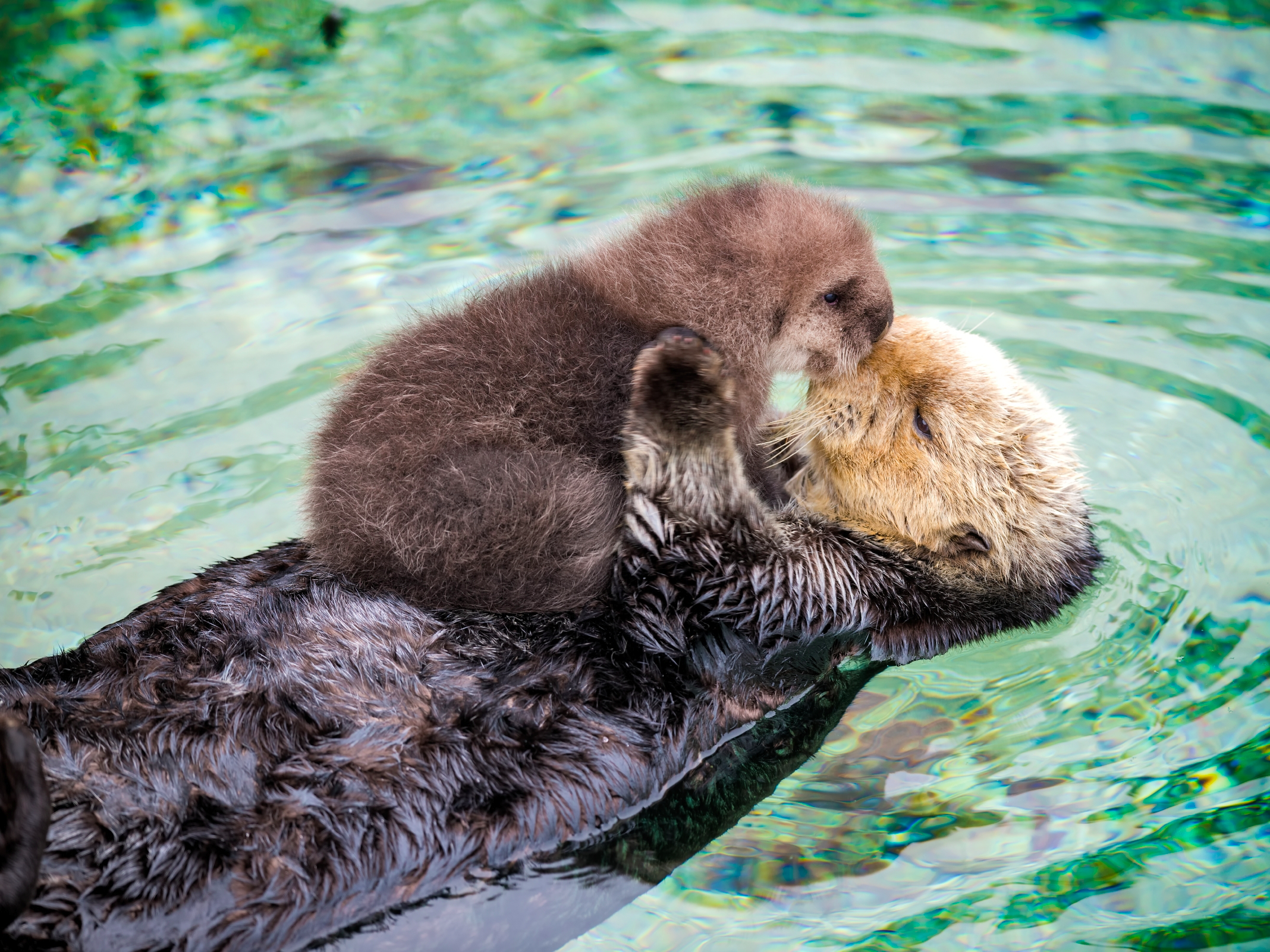 this-adorable-baby-sea-otter-signifies-a-big-cause-for-celebration.jpg