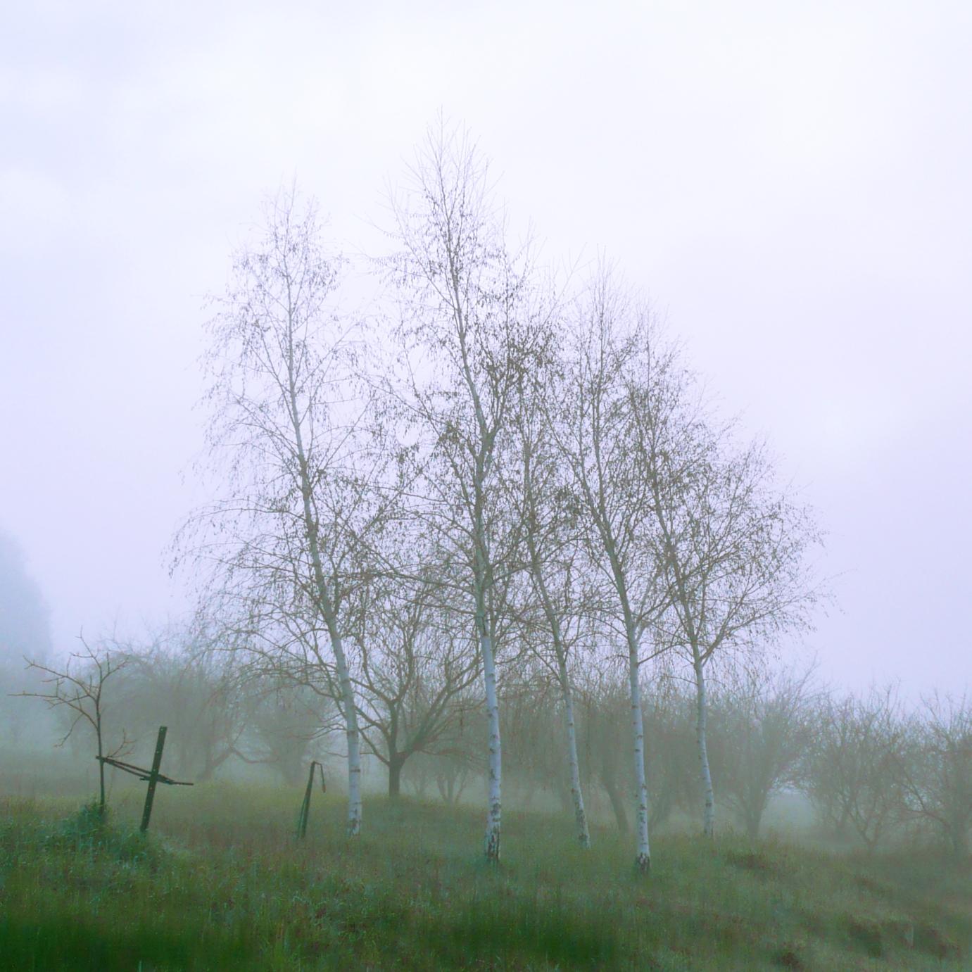 Balingup trees, 20.07.08